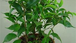 Stor krukväxt med gröna blad.