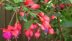 Växt med gröna blad och rosa blomma.