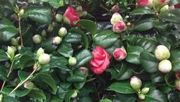Grön växt med röda blommor.