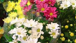 Många blommor i olika färger