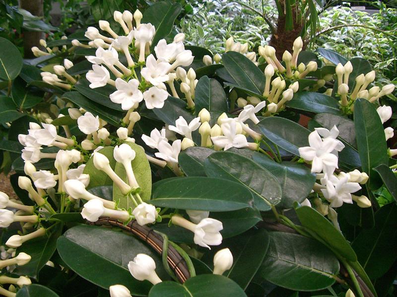 grön växt med vita blommor