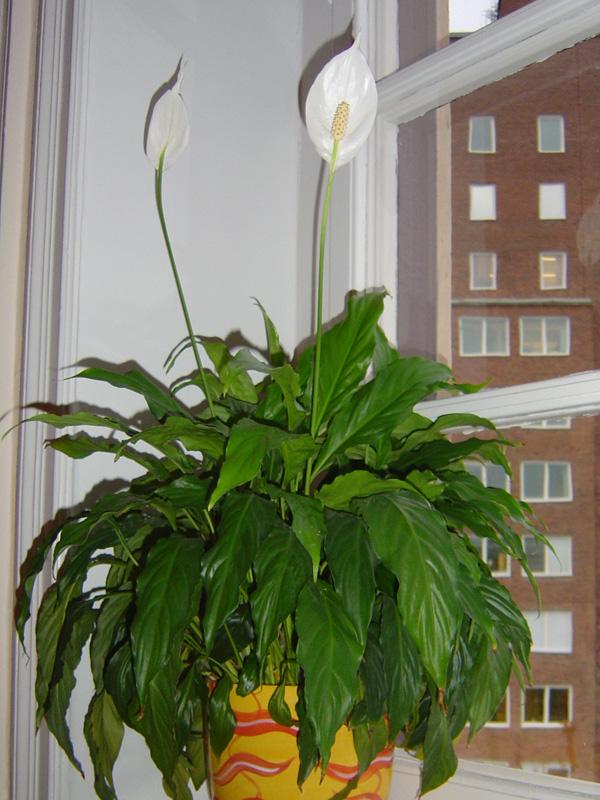 växt med vita blommor